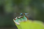 /images/photography/home/wildlife_2009/DSC_0229.png