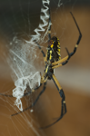 /images/photography/home/wildlife_2009/DSC_0279.png